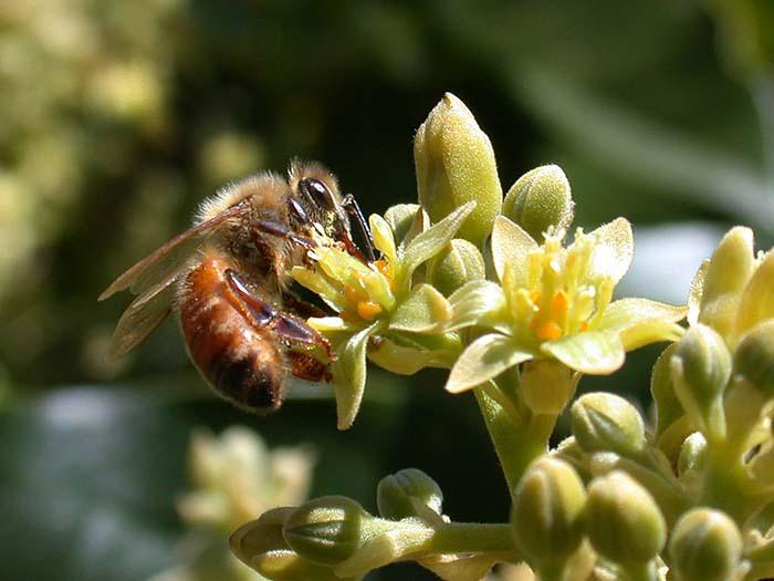 Insects, Integrated Pest Management & Biocontrol