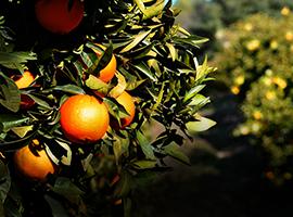 Orange Roots Exhibition